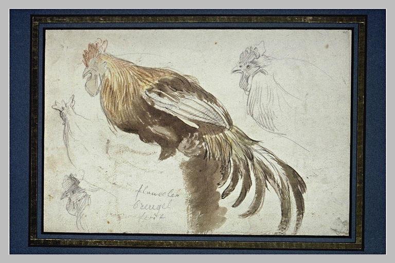 Etude d'une poule et trois croquis de sa tête