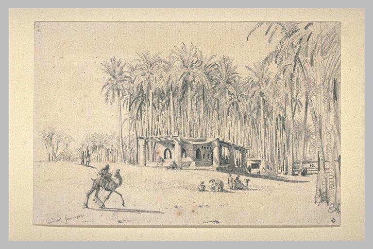 Vue prise au Caire ; forêt de palmiers
