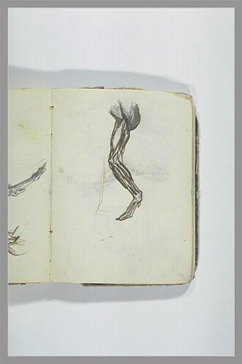CHAPU Henri Michel Antoine : Ecorché d'une aile d'oiseau