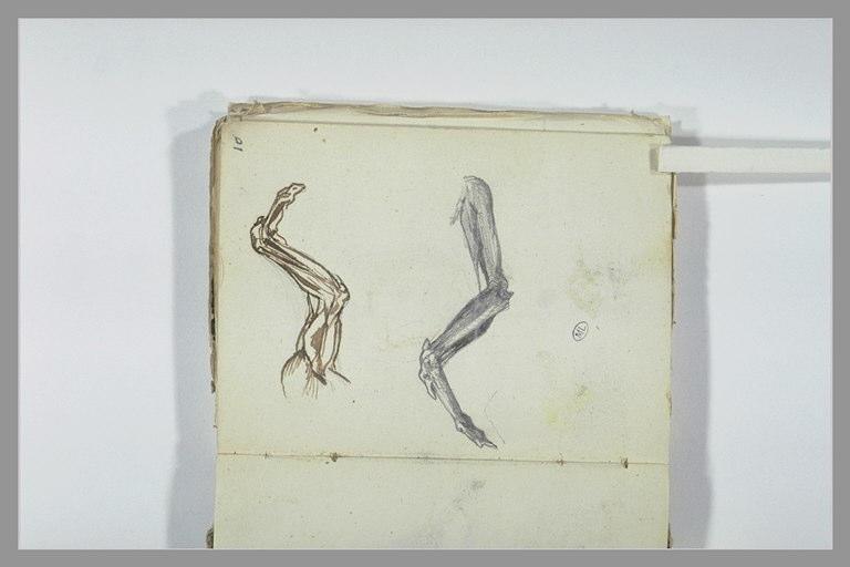 CHAPU Henri Michel Antoine : Ecorchés d'une aile d'oiseau