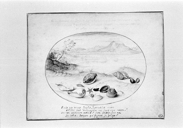 Coquillages avec vue de Naples et du Vésuve au fond