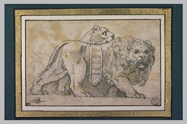 Un lion et une lionne debout, marchant vers la droite