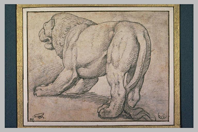 Une lionne vue par derrière tournée à gauche