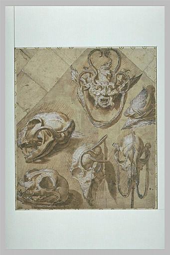 Etude de crânes d'animaux, et d'un masque