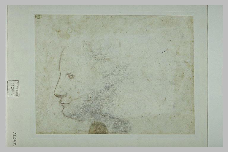 Tête de femme, vue de profil