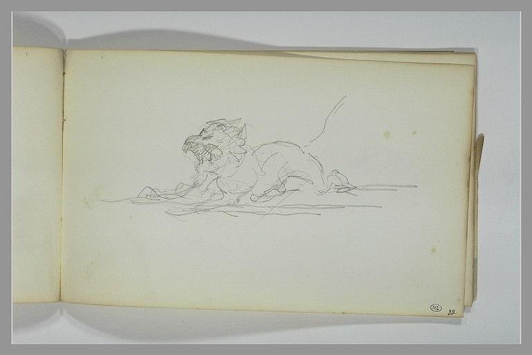 Un lion rugissant