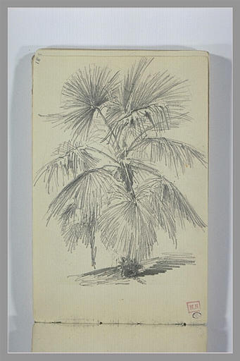 Etude de palmier