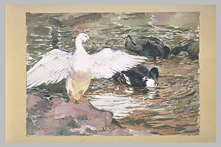 Canards sur l'eau