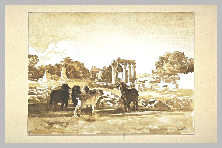 Chèvres dans les ruines de Médamond