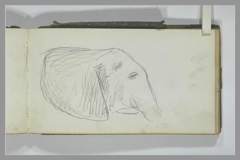 YVON Adolphe : Tête d'éléphant