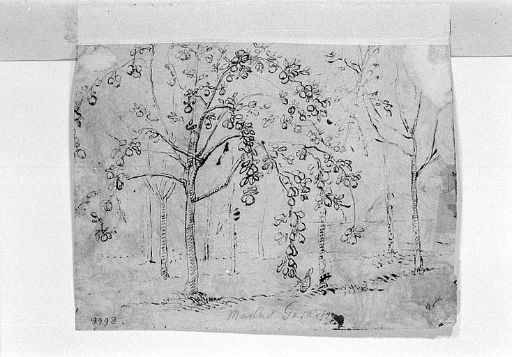 Etudes d'arbres fruitiers