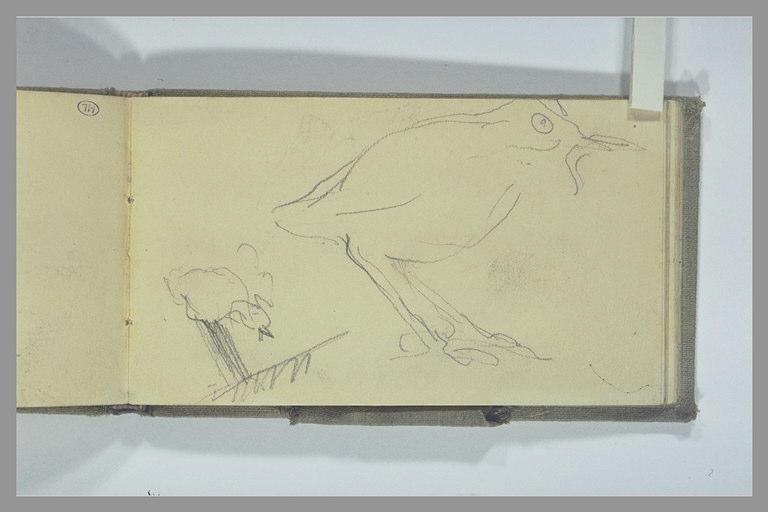 POMPON François : Deux études d'oiseaux