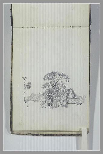 Maisons près d'un grand arbre