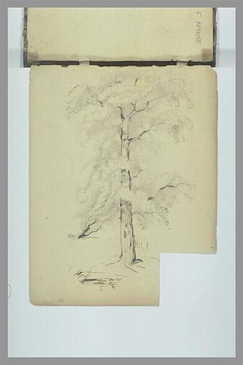 Etude d'arbre_0