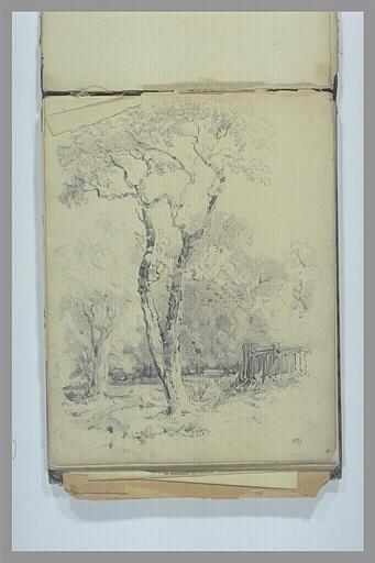 DEGAS Edgar : Paysage avec étude d'arbres