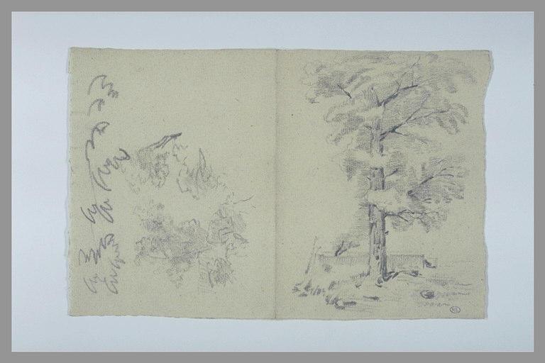 Etudes de feuilles ou de branchage ; arbre