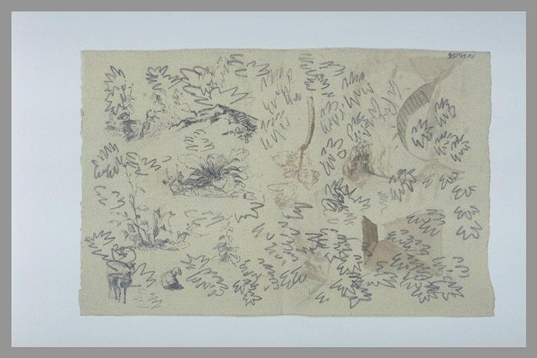 DEGAS Edgar : Etudes de feuilles, de touffes d'herbes, de branches et de deux moutons