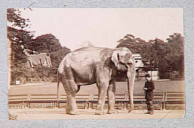 Eléphant et cornac occidental_0