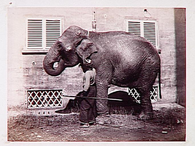 Eléphant tourné vers la gauche et cornac indien_0
