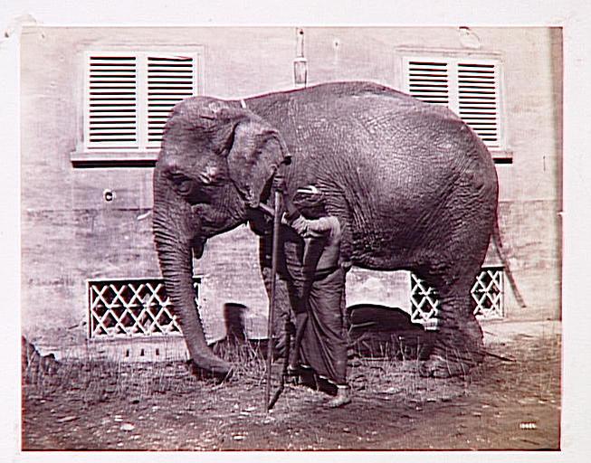 Eléphant tourné vers la gauche et cornac indien