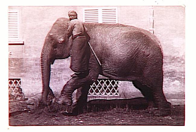 Eléphant tourné vers la gauche, cornac et enfant indiens_0