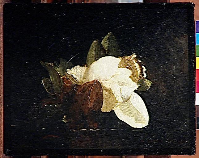 Magnolia_0