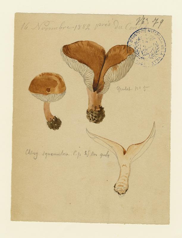 Clitocybe squamuleux ; champignon_0