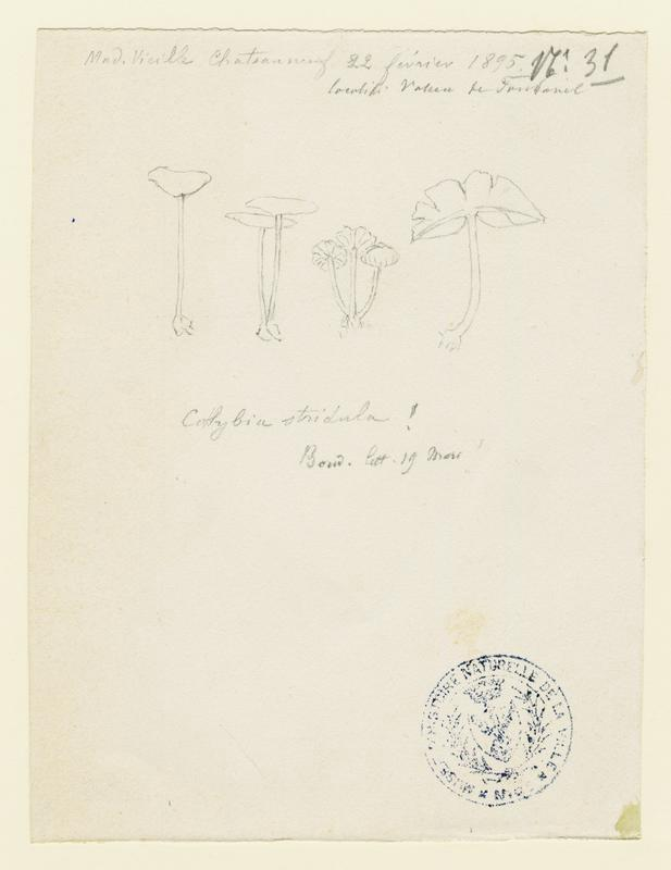 Collybie  ; champignon