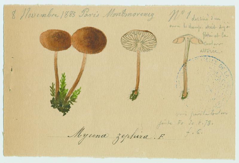 Zephyrus ; champignon_0