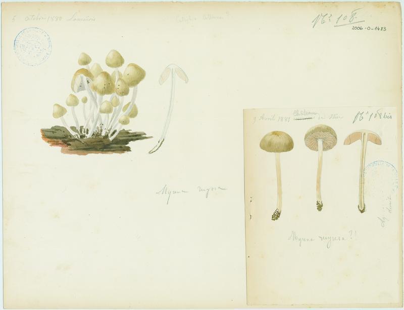 BARLA Jean-Baptiste (attribué à) : Mycène, champignon