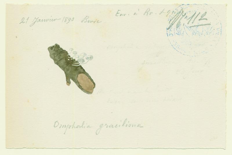BARLA Jean-Baptiste (attribué à) : Omphale, champignon