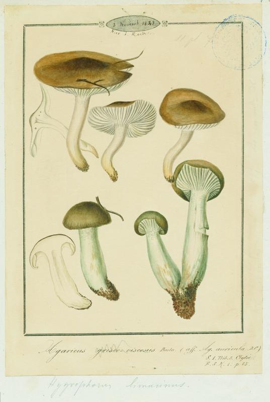 BARLA Jean-Baptiste (attribué à) : Agaric, champignon