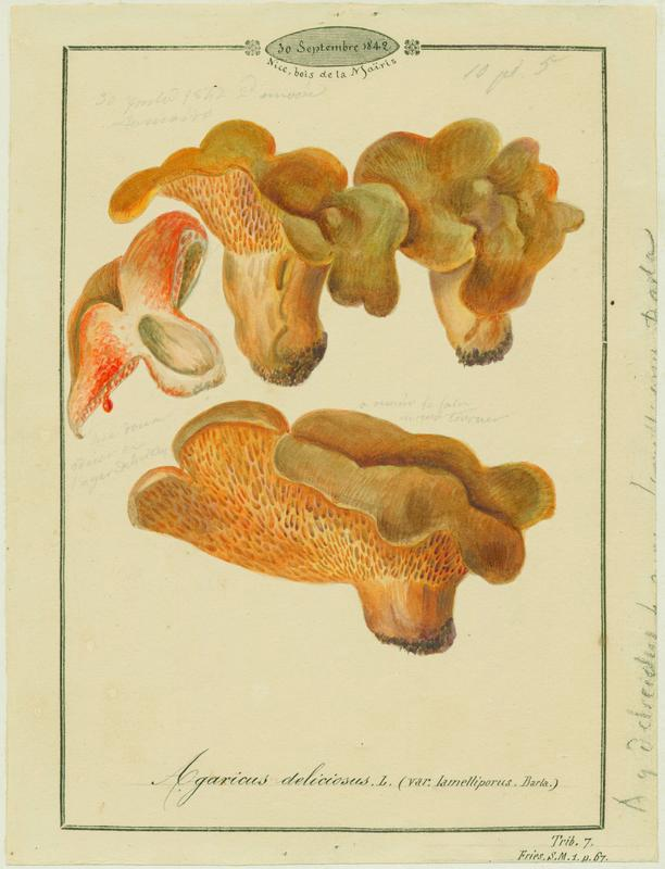 Agaric ; Sanghin Berigoula ; champignon_0