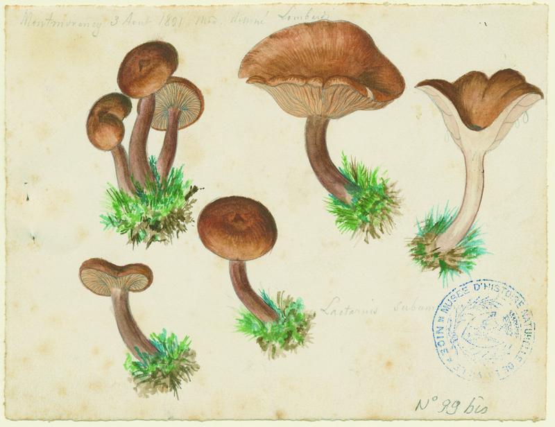 Lactaire chagriné ; champignon_0