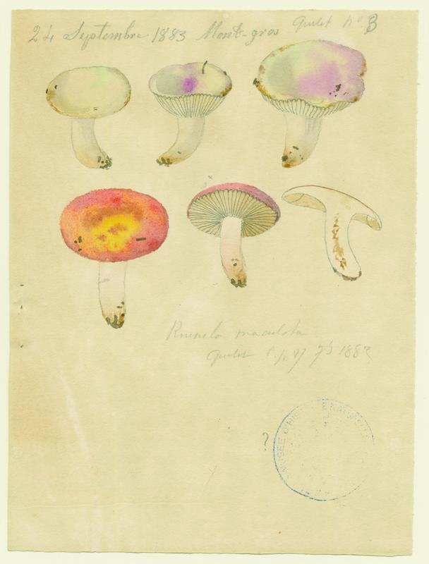 BARLA Jean-Baptiste (attribué à) : Russule maculée, champignon