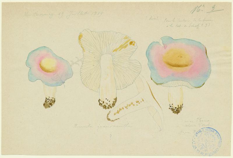 FOSSAT Vincent (aquarelliste, peintre), BASSO P : Russule charbonnière, champignon