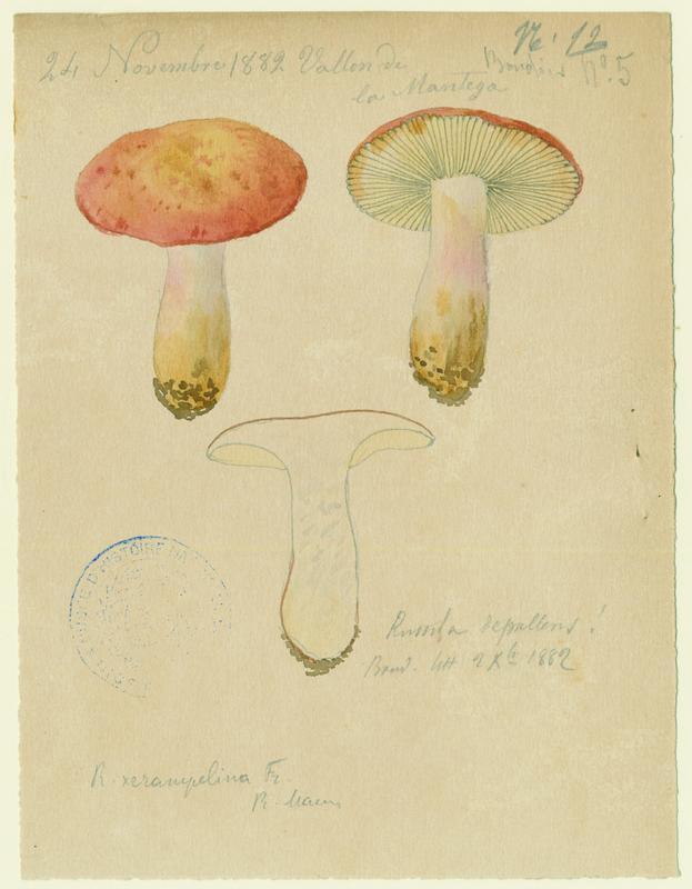 Russule ; champignon_0
