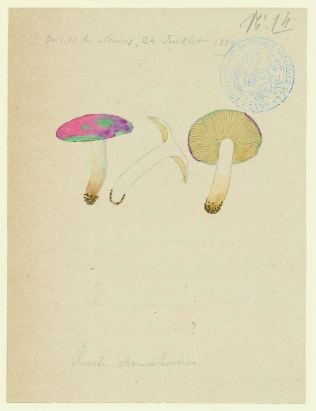 BARLA Jean-Baptiste (attribué à) : Russule caméléon, champignon