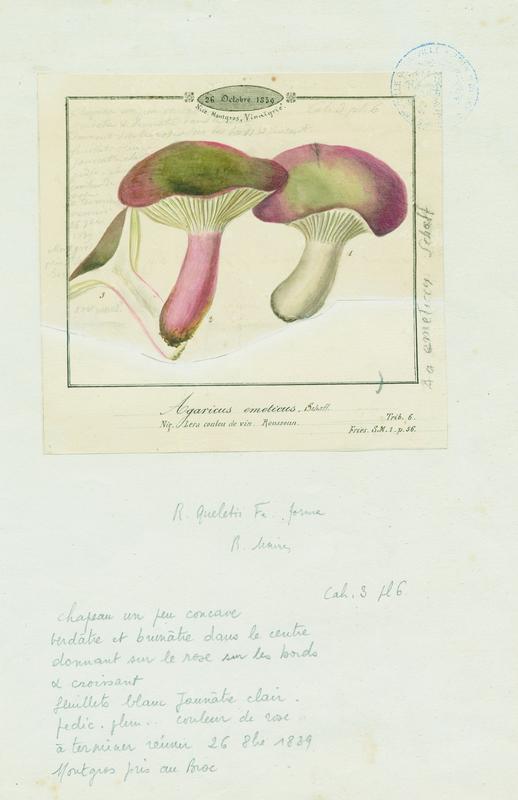 Russule émétique ; Lera coulou de vin ; champignon_0