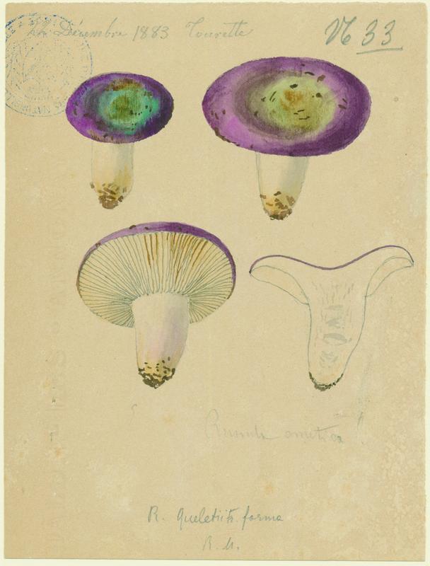 BARLA Jean-Baptiste (attribué à) : Russule émétique ,Lera coulou de vin, champignon