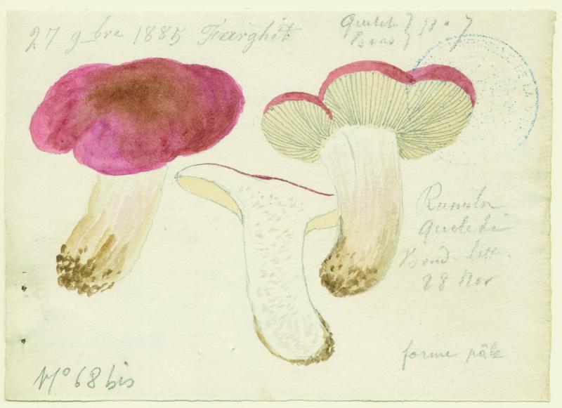 BARLA Jean-Baptiste (attribué à) : Russule de Quélet, champignon