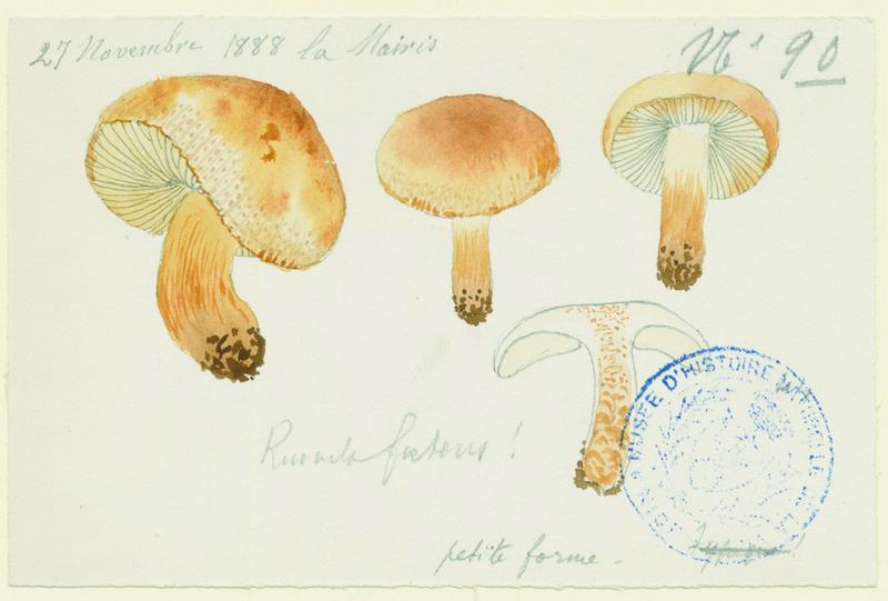 BARLA Jean-Baptiste (attribué à) : Russule fétide, champignon