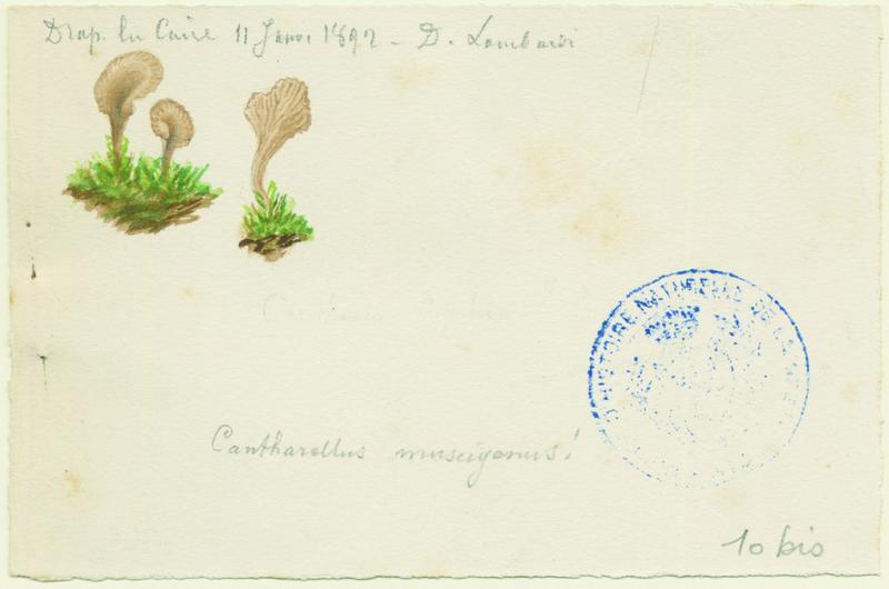 LOMBARDI Charles : Omphale, champignon