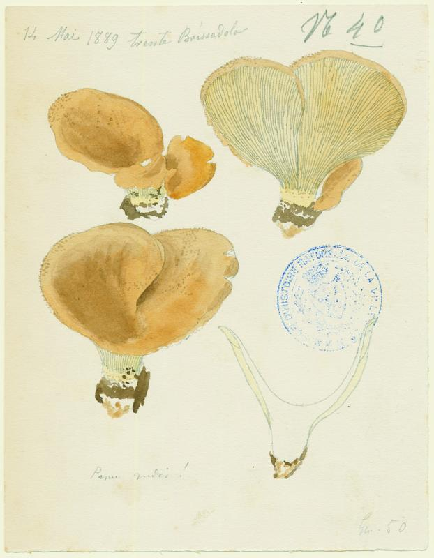 Lentin ; champignon_0