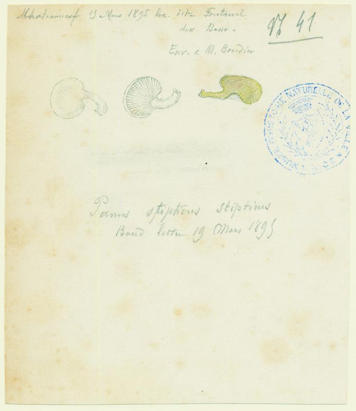 Panelle astringente; champignon