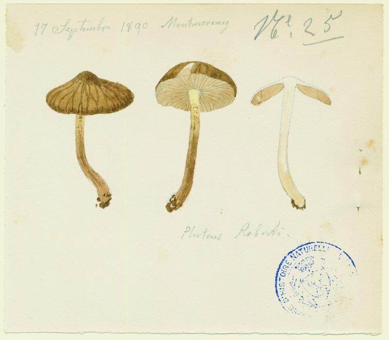 Plutée ; champignon