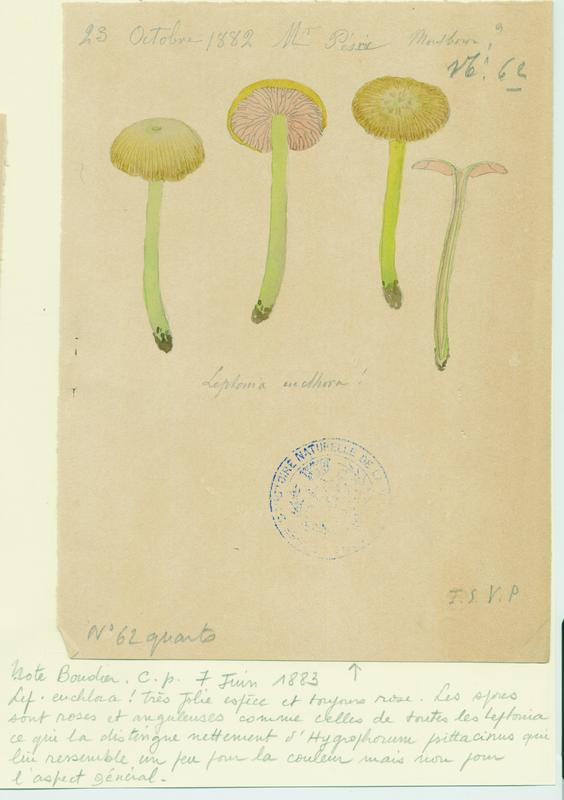 anonyme : Entolome, champignon