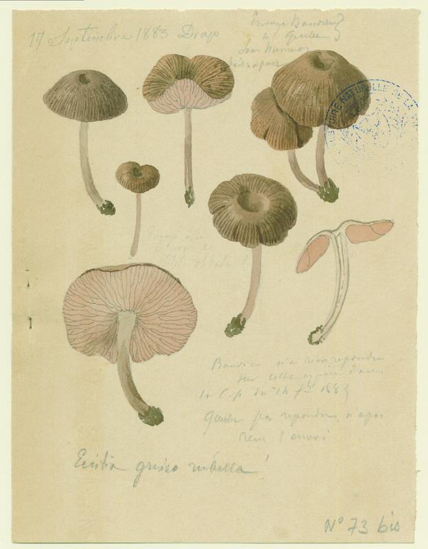 BARLA Jean-Baptiste (attribué à) : champignon