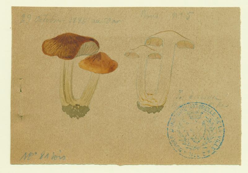 Inocybe négligé ; champignon_0