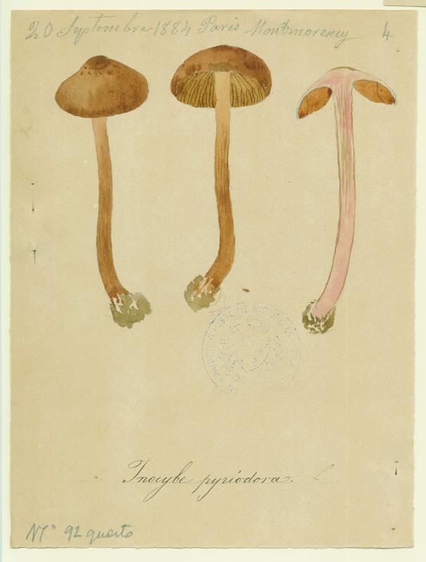 Inocybe à odeur de poire ; champignon